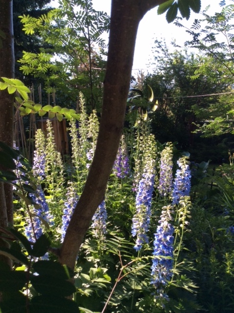 Cottage Garden in the Inner City – a Distinct Style